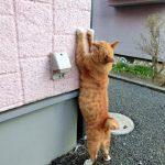 猫が爪とぎジーンズ
