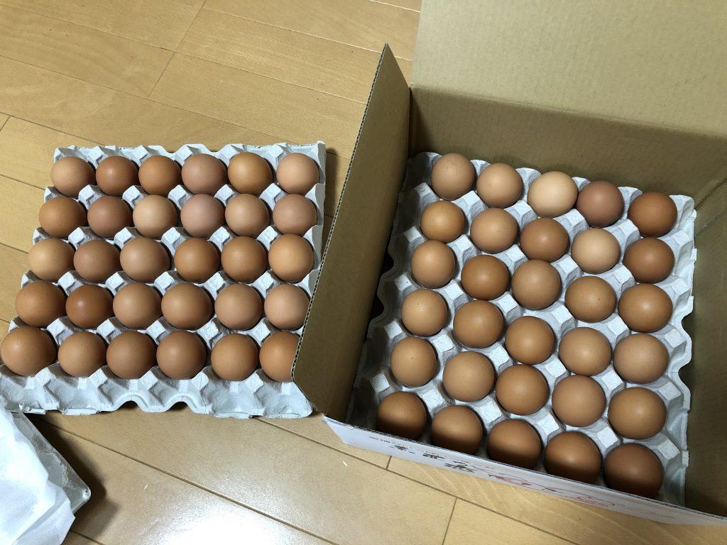 ふるさと納税 米 のり 卵